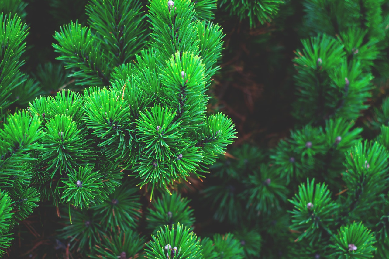 Vain sertifioidusta puusta